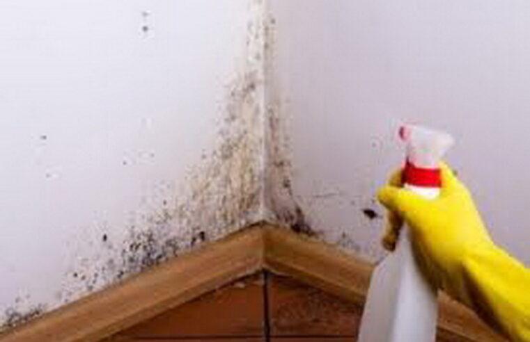 Quais são os tipos de umidade que aparece na parede e soluções para o problema